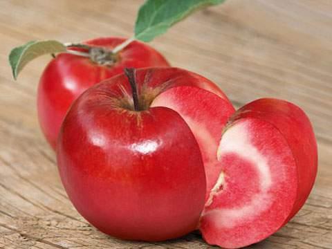 выведение новых сортов яблони
