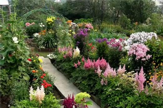 Цветы в саду. фото.